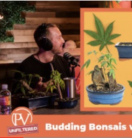 Talking Cannabonsai with the PV Official Podcast by Platinum Premium Cannabis